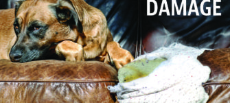 Restoring Pet Damage on Furniture