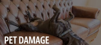 Restoring Pet Damage on Furniture